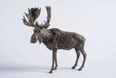 Bronze Foundry Cast Moose Sculpture